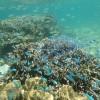 久しぶりに沖縄の海でシュノーケル(動画)なんと、イワシの大群に遭遇!