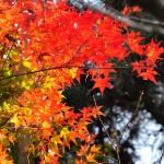沖縄県に秋はない!?昨日までは夏そして突然今日から冬になる。
