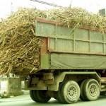 沖縄県で冬の風物詩といえば。。。サトウキビを山積みにして走っているトラック