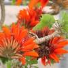 沖縄県ではデイゴの花の咲き具合で、今年の台風予想を占うんです!?