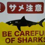 【今年初のシュノーケル】しかし・・・ビーチ入り口に「サメ注意!」の看板を発見!?