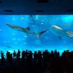 【沖縄移住】海洋博公園(美ら海水族館)が40周年になりました!