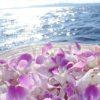大好きな沖縄に骨を埋めたい!そんな方の願いが叶う今話題の散骨。