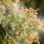 【沖縄のウワサ話】沖縄に住むと、花粉症が治るってウワサは本当?