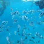 沖縄旅行する時の必須アイテム!水陸両用のオリンパス デジタルカメラで想い出を残そう