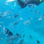 海の中で渋滞が発生するほど人気がある真栄田岬の「青の洞窟」シュノーケル動画。