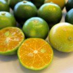 1年に3度の収穫時期がある「シークワーサー」は健康果実で栄養価も高い。