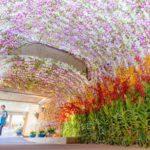 日本で1番歴史のあるラン展『沖縄国際洋蘭博覧会2018』が今週の土曜日から沖縄で開催!