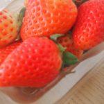 """【ふるさと納税】今が旬のイチゴ、""""さがほのか""""が5000円から寄付できます。"""