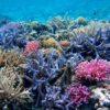沖縄のサンゴ礁が大ピンチ!サンゴの白化現象が止まらない理由と対策。