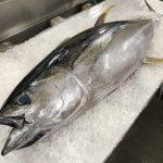生鮮マグロの水揚げ量が全国トップクラスの沖縄県は「年中マグロ天国」?