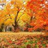 【沖縄のハテナ?】沖縄で秋を感じる「紅葉」って見れるのかな?