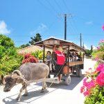 この時期におススメなのが「水牛車観光」本島と離島3選。
