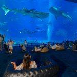 コタツでジンベイサメが見れる?美ら海水族館で夜の営業「美ら海ナイトアクアリム」が好評につき開催中!