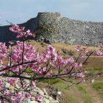 世界遺産を見ながら日本一早い桜で花見はいかが?
