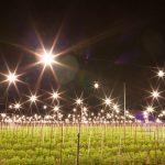 沖縄県の夜の観光スポット「キクミネーション」でインスタ映えの写真を
