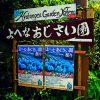 梅雨時期の沖縄旅行でピッタリな場所「よへなあじさい園」